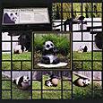 Panda Memorial