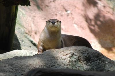 Audubon Zoo otter - tami potter