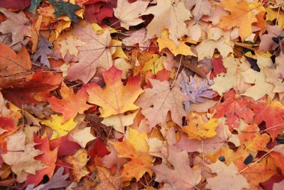 Leaves- tami potter