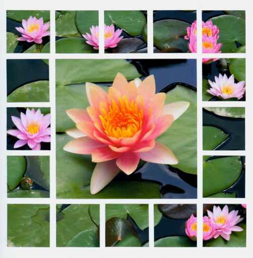 6x6_flower3