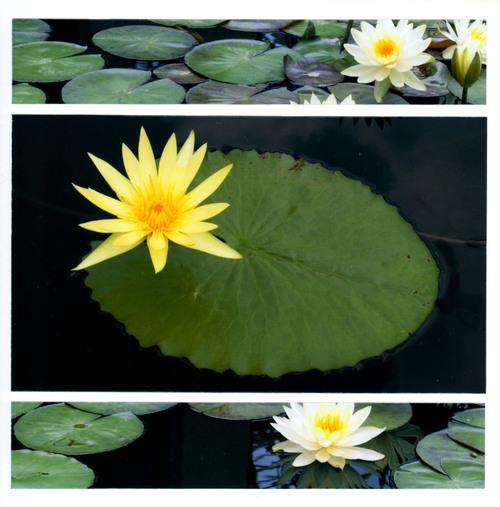 6x6_flower4