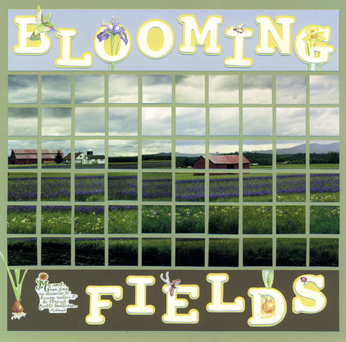 Blooming Fields